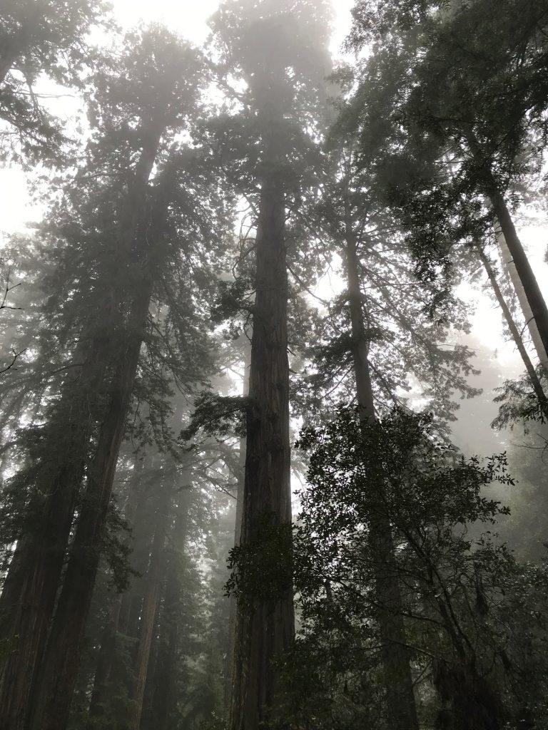 Trees (photo)